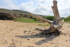 Vecchio ceppo di albero Fotografia Stock