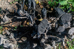 Vecchio ceppo di albero con erba verde e le foglie gialle asciutte dei morti Vecchio albero del taglio con le foglie gialle asciu Fotografia Stock