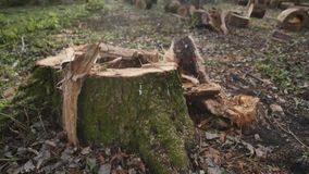 Vecchio ceppo di albero nel parco di autunno stock footage