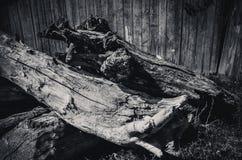 Vecchio ceppo di albero stagionato con la radice Fotografie Stock Libere da Diritti