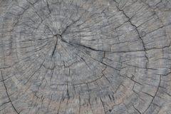 Vecchio ceppo di legno Immagini Stock