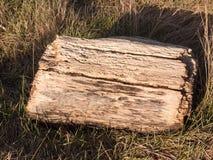 vecchio ceppo di legno dell'albero tagliato sulla fine dell'erba sui fori Fotografia Stock Libera da Diritti
