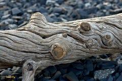 Vecchio ceppo espulso sulla riva di mare. Fotografia Stock