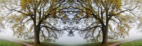 Vecchio collage della quercia Fotografia Stock Libera da Diritti