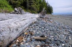 Vecchio collega una spiaggia sulla costa del Pacifico, Canada fotografie stock libere da diritti
