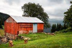 Vecchio cottage di legno rosso nella foresta Fotografia Stock
