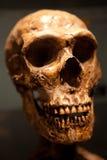 Vecchio cranio fotografia stock
