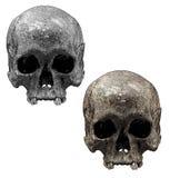 Vecchio cranio Immagini Stock Libere da Diritti