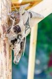 Vecchio cranio della capra di fascino, dettaglio del cranio di un animale antico Fotografia Stock