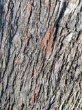 Vecchio dettaglio di legno B di struttura immagine stock