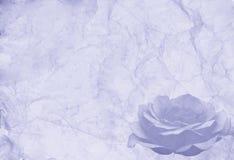 Vecchio documento blu con una rosa Immagini Stock Libere da Diritti