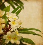 Vecchio documento con i fiori tropicali Immagini Stock Libere da Diritti