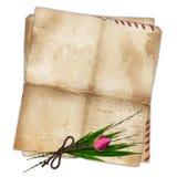 Vecchio documento con il foglio del bambù e della rosa Fotografia Stock