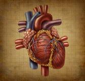 Vecchio documento medico di Grunge del cuore umano Fotografie Stock Libere da Diritti