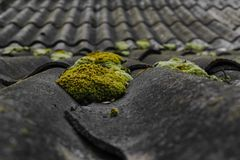 Vecchio e coperto di ardesie ondulate del tetto del muschio verde copre il granaio fotografie stock libere da diritti