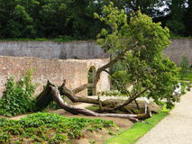 Vecchio ed albero obliquo Immagine Stock Libera da Diritti