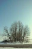 Vecchio effetto della foto dell'albero asciutto Fotografia Stock Libera da Diritti