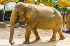 vecchio elefante fotografie stock libere da diritti