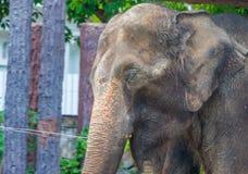vecchio elefante Fotografia Stock Libera da Diritti