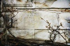 Vecchio fasade della parete Fotografie Stock Libere da Diritti