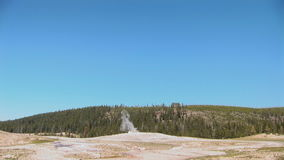 Vecchio fedele in Yellowstone stock footage