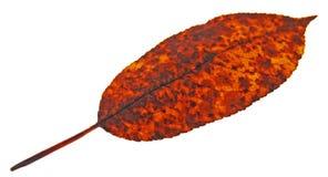 Vecchio foglio di autunno Fotografie Stock Libere da Diritti
