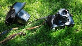 Vecchio fondo dell'ombra dell'albero di erba verde della macchina fotografica nessuno metraggio del hd stock footage