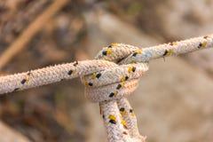 Vecchio fondo della sfuocatura del nodo della corda Immagini Stock