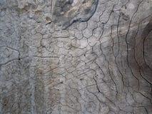 Vecchio fondo di legno del primo piano di struttura della plancia Fotografia Stock Libera da Diritti