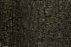 Vecchio fondo di legno del tronco o di struttura Il materiale di legno dal naturale ha bagnato la superficie fotografia stock libera da diritti