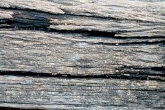 Vecchio fondo di legno di struttura dell'albero Immagine Stock Libera da Diritti