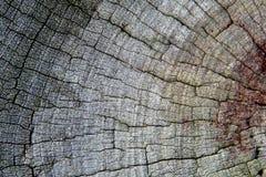 Vecchio fondo di legno grigio di struttura Fotografia Stock