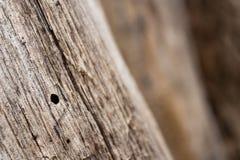 Vecchio fondo di legno - incrinato ed alimentare entro tempo Fotografie Stock Libere da Diritti