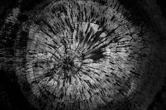 Vecchio fondo di legno di legno di struttura degli anelli di albero del fondo di struttura vecchio immagini stock libere da diritti