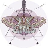 Vecchio fondo di modo dei pantaloni a vita bassa con il lepidottero Immagini Stock