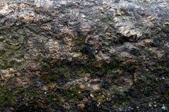 vecchio fondo di pietra del primo piano con un po'muschio immagine stock