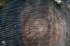 Vecchio fondo di sezione trasversale dell'albero Immagini Stock