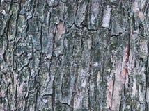 Vecchio fondo di struttura della corteccia di albero del primo piano fotografia stock