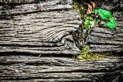 Vecchio fondo strutturale di legno Fotografia Stock Libera da Diritti