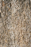 Vecchio frammento della corteccia di albero Immagini Stock Libere da Diritti