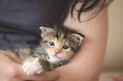 vecchio gattino adottato del calicò da 3 settimane nelle armi di una giovane signora immagini stock