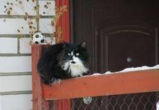 Vecchio gatto fotografia stock