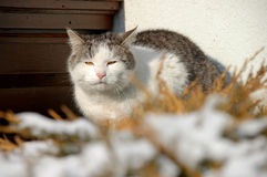 Vecchio gatto Fotografie Stock