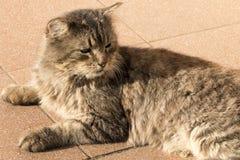 Vecchio gatto della via che riposa sul marciapiede immagini stock libere da diritti