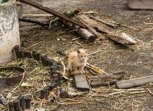 Vecchio gatto rosso senza tetto che si siede sulla fine al suolo su Il concetto degli animali domestici e della cura per loro Fotografie Stock Libere da Diritti