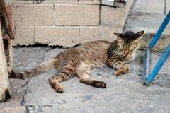 Vecchio gatto senza tetto che dorme sulla via Immagini Stock Libere da Diritti