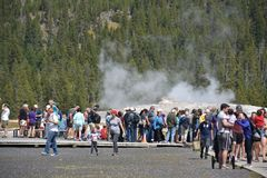 Vecchio geyser fedele al parco nazionale di Yellowstone Immagini Stock