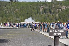 Vecchio geyser fedele al parco nazionale di Yellowstone Immagini Stock Libere da Diritti