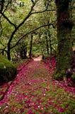 Vecchio giardino Fotografie Stock