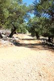 Vecchio giardino di olivo in Lun fotografia stock libera da diritti